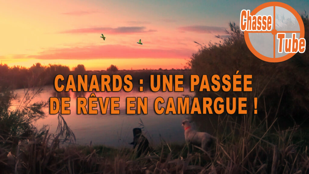video chasse canard