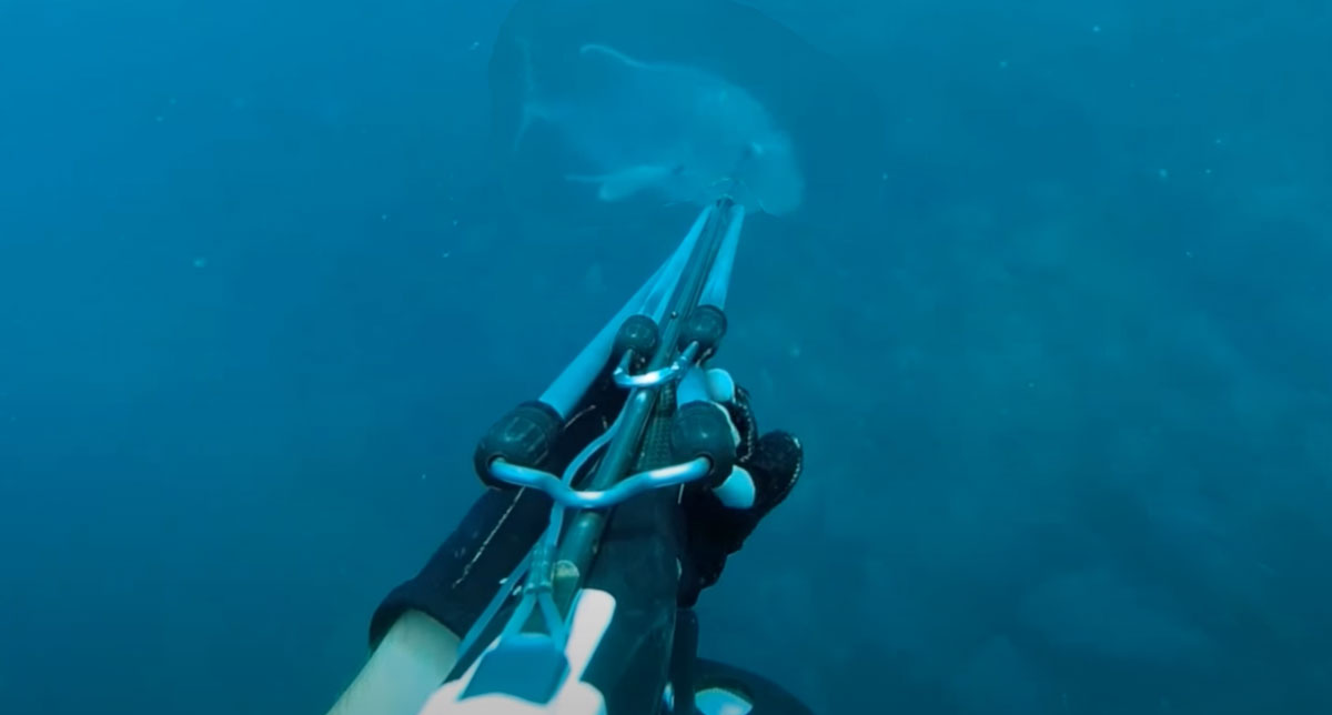 Video chasse sous-marine Madagascar